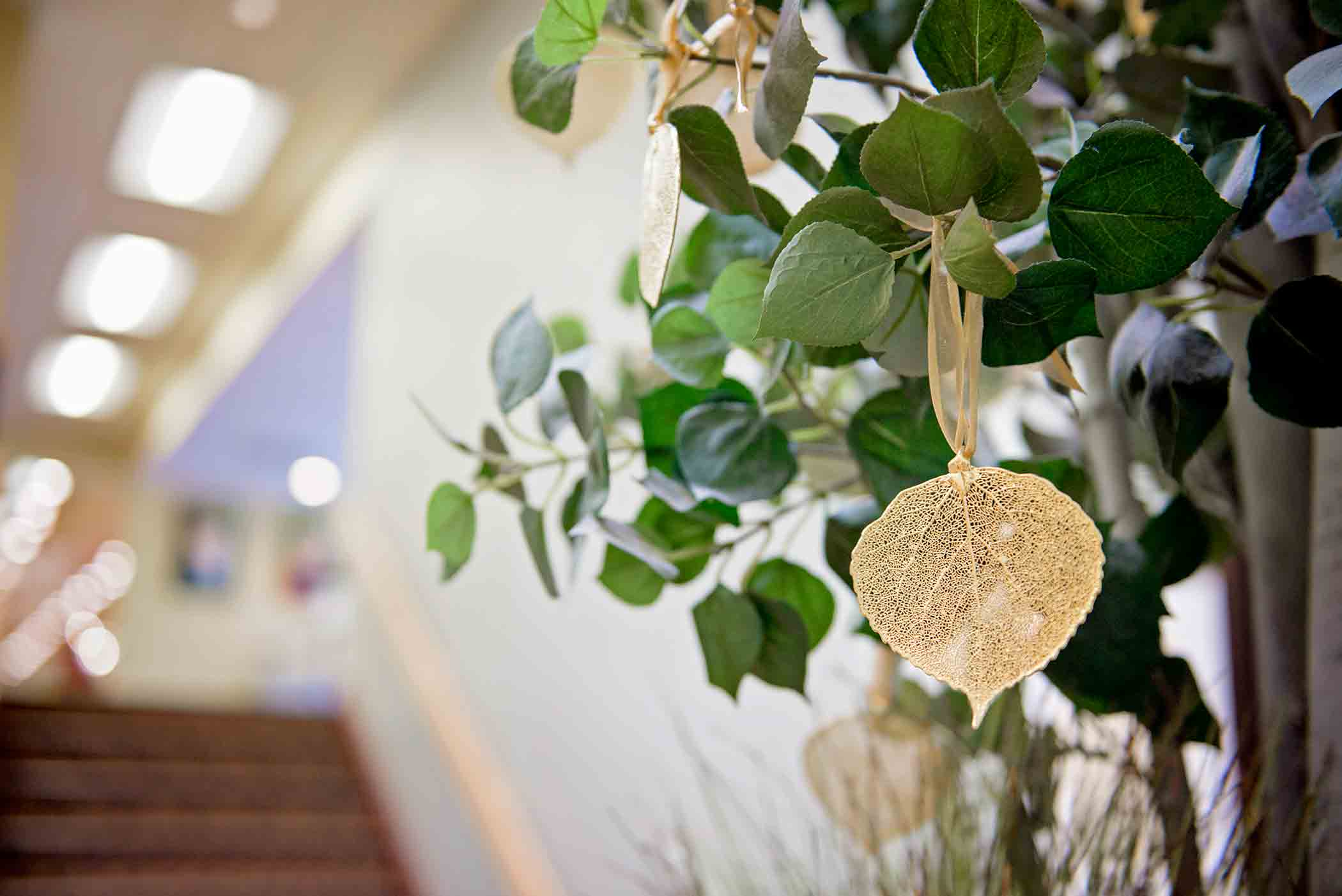 A photo of an Aspen leaf at Aspen Academy